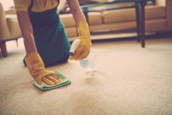 便利なアイテムを利用して、カーペットをきれいに掃除しよう!
